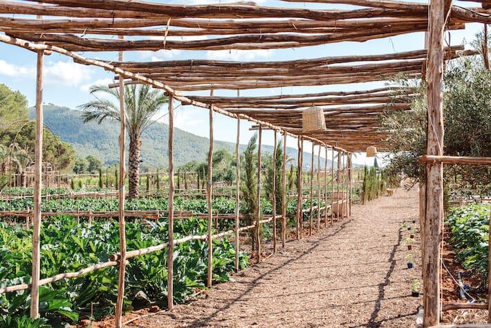 Hotels We Love: Atzaró Agroturismo, Ibiza - Vegetable Garden (Ph. Atzaro)