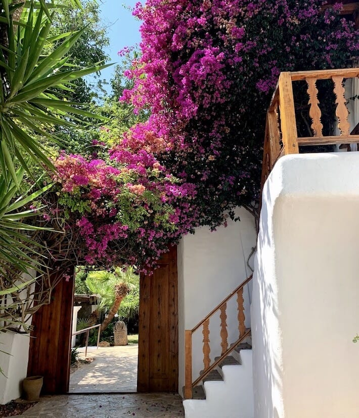 Atzaró Ibiza: Redesigning Summer 2020 - Bougainvilleas (Ph. Alessandro Garzi)