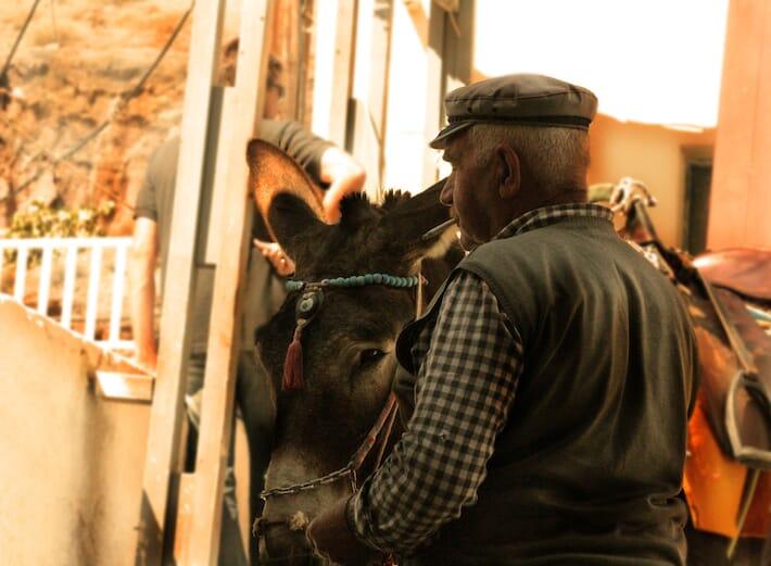 Donkeys in Santorini (Ph. by Valentina Contavalle)